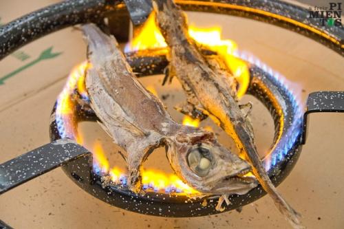 Capellán a la llama